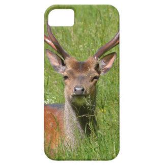 Buck fallow deer in grass iPhone SE/5/5s case