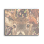 Buck in Camo White Tail Deer Envelope