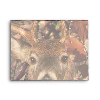 Buck in Camo White Tail Deer Envelope