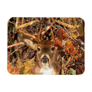 Buck in Camo White Tail Deer Magnet