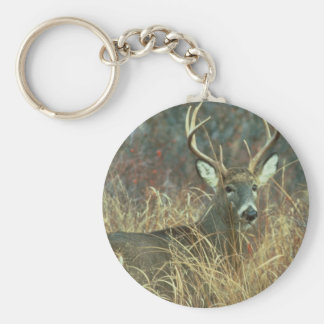 Buck in the Grass Basic Round Button Keychain