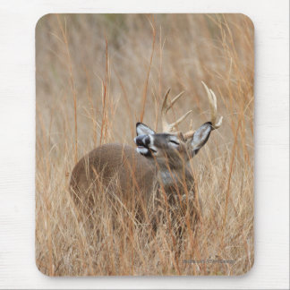 Buck in the Grass Mouse Pad
