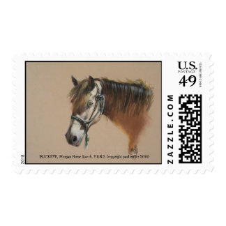 buck   morgan horse ranch PRNS  15x13 inches pa... Postage Stamp