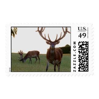 Buck Postage Stamp