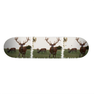 Buck Skateboard