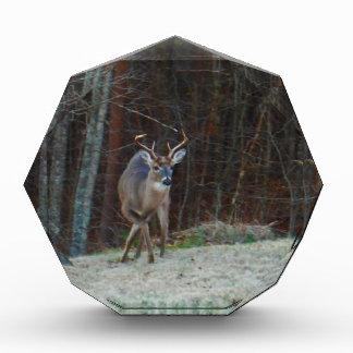 Buck Stag Deer, Marking his Ground Acrylic Award