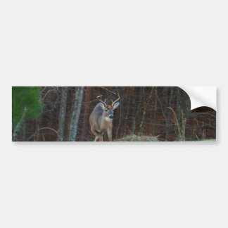 Buck Stag Deer, Marking his Ground Bumper Sticker