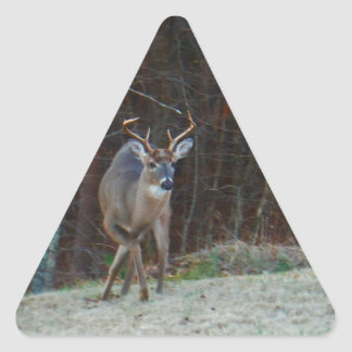 Buck Stag Deer, Marking his Ground Triangle Sticker