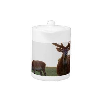 Buck Teapot