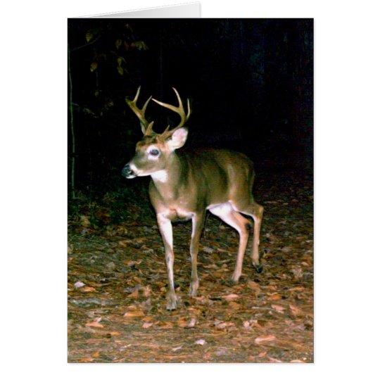 Buck White Tail Deer Card
