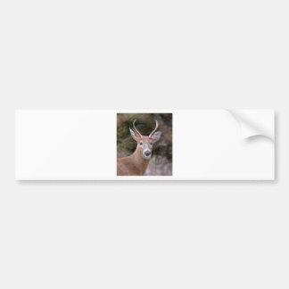Buck White-Tailed Deer Bumper Sticker