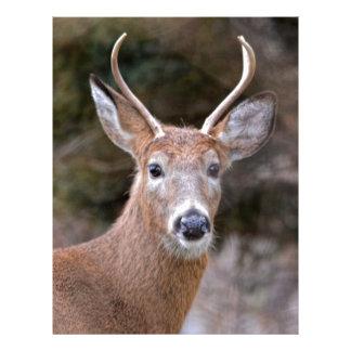 Buck White-Tailed Deer Letterhead