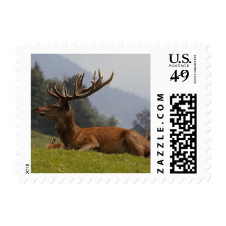 Buck with large Antlers postage 443