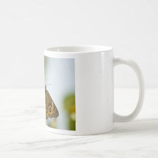 Buckeye Beauty Coffee Mug