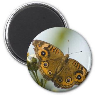 Buckeye Beauty Fridge Magnets