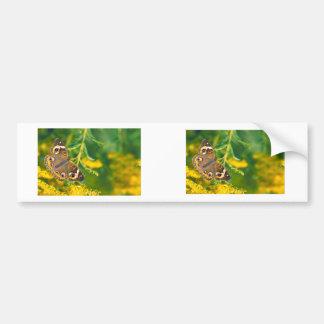 Buckeye Butterfly Bumper Sticker