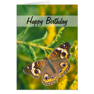 Buckeye Butterfly Card