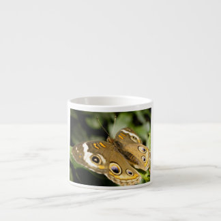 Buckeye Butterfly Espresso Cup
