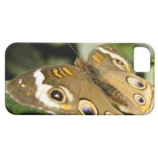 Buckeye Butterfly iPhone 5 Cases