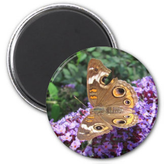 Buckeye butterfly ~ magnet