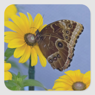 Buckeye Butterfly on Yellow Daisy Square Sticker