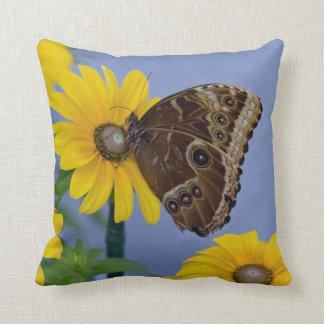 Buckeye Butterfly on Yellow Daisy Throw Pillow