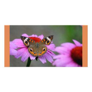 Buckeye Butterfly Photo Card