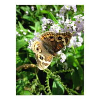 Buckeye Butterfly Photograph