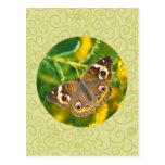 Buckeye Butterfly Post Cards