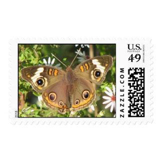 Buckeye Butterfly Postage
