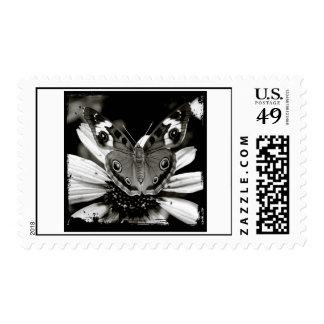 Buckeye Butterfly Postage Stamp