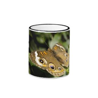 Buckeye Butterfly Ringer Mug