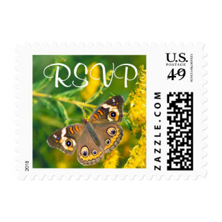 Buckeye Butterfly - RSVP Postage