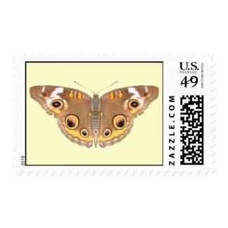 Buckeye Butterfly ~ stamp