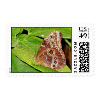 Buckeye Butterfly Wings Postage Stamp