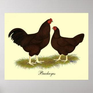 Buckeye Chickens Poster