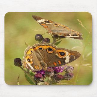 Buckeye Duo ~ Buckeye Butterfly Mouse pad