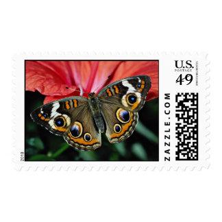 Buckeye, Junonia coenia  flowers Stamp