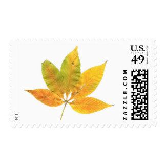 Buckeye Stamp