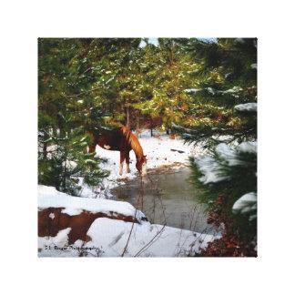~Buckie on Rogers' Hobby Farm~ Canvas Print