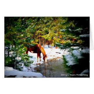~Buckie on Rogers Hobby Farm~ Card