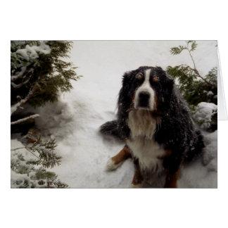 Buckminster Loves Snow Card