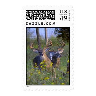 Bucks at Fence Stamp