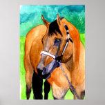 Buckskin Halter Horse Quarter Horse Portrait Poster