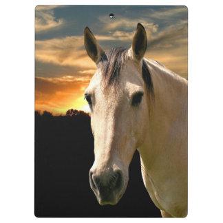 Buckskin horse at sunset clipboards