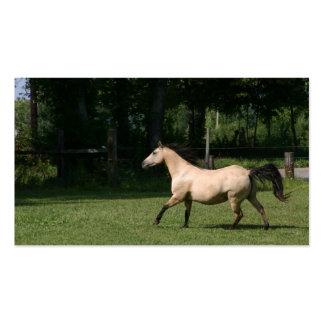 Buckskin horse business card