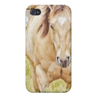 Buckskin Horse Case Case For iPhone 4