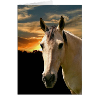 Buckskin horse sunset greeting card