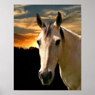 Buckskin horse sunset poster