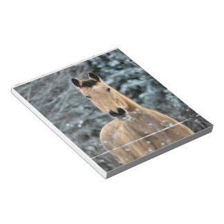 Buckskin Horse Winter Memo Pad